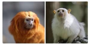 singes-disparus-zoo-bauval