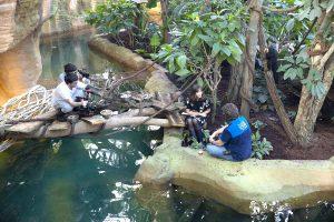 Reportage zoo de Beauval M6 zone interdite