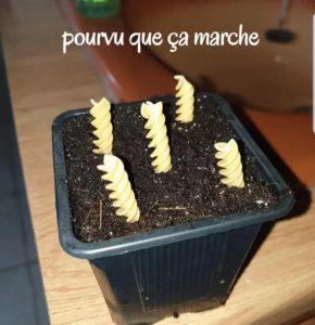 Planter des pates photo marrante