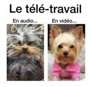 difference d'allure en visio conference avec ou sans video, ici avec chiens en pohoto pour blague marrante