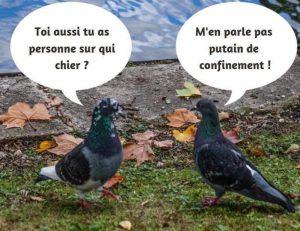 humour quanrantantaine cronavirus pigeons ont personne sur qui faire caca