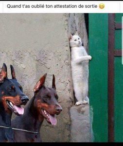 chat se cache des chiens pendant confinement car sortie sans fiche derogation