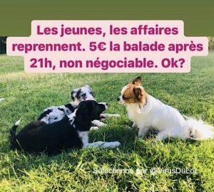 https://www.parc-attraction-loisirs.fr/files/2020/10/blague-chien-a-louer-couvre-feu-paris-2020-300x270.jpg