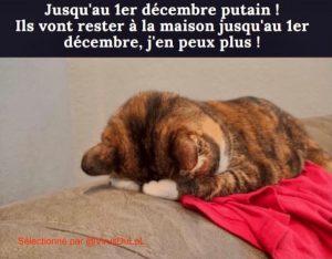 blague chaton qui pleure parce que on a confinement jusqu'au 1er décembre